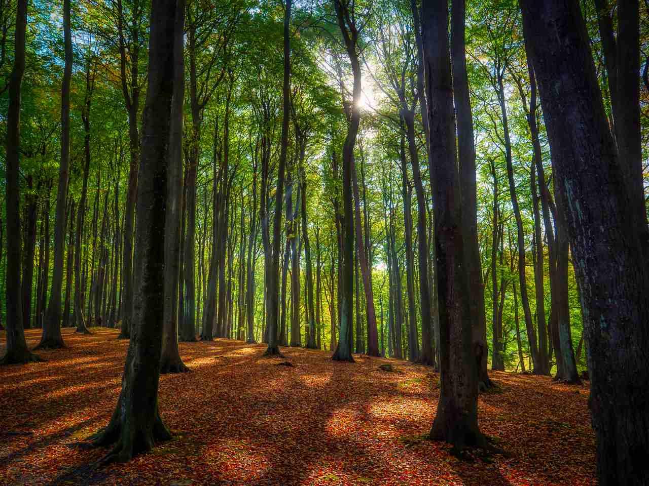 Binzer Wald