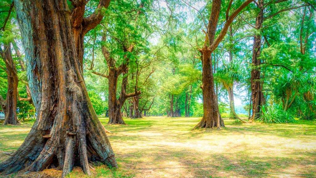 Bäume oberhalb des Strandes
