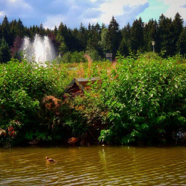 Kranicher Teich in Hahnenklee